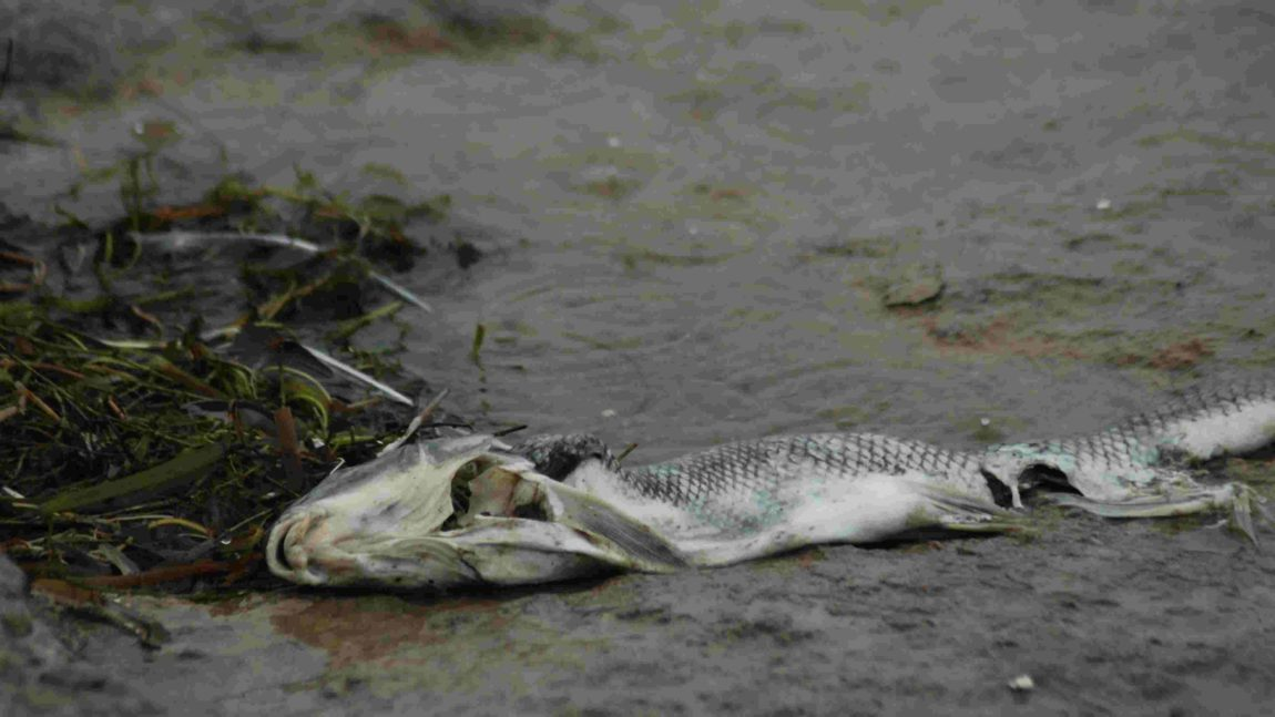3 Ways to Keep from being a Dead Fish at the bottom of a Muddy Puddle
